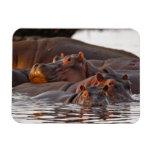 Hippopotamus, Hippopotamus amphibius, Lake Flexible Magnet