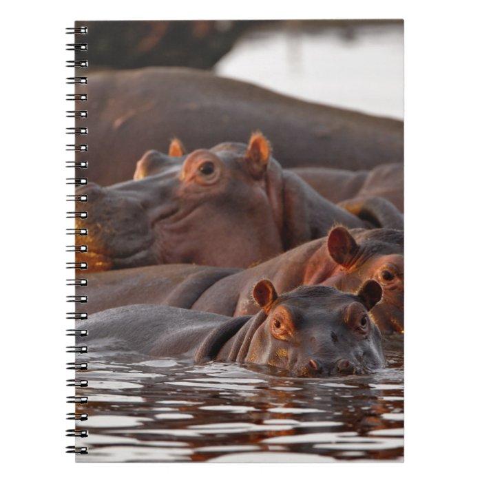 Hippopotamus, Hippopotamus amphibius, Lake Spiral Notebook
