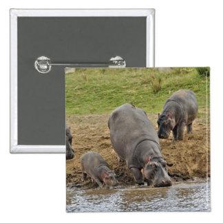 Hippopotamus, Hippopotamus amphibius, Serengeti Pinback Button