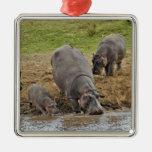 Hippopotamus, Hippopotamus amphibius, Serengeti Square Metal Christmas Ornament