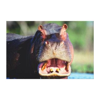 Hippopotamus (Hippopotamus Amphibius) Threat Canvas Print