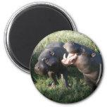 Hippopotamus Iman Para Frigorífico