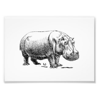 Hippopotamus Photo Print