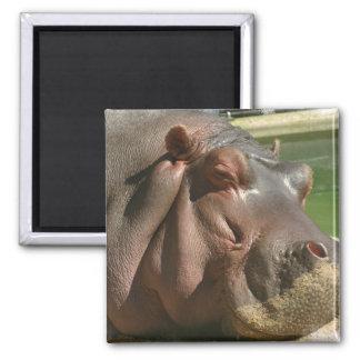 Hippopotamus Square Pin 2 Inch Square Magnet