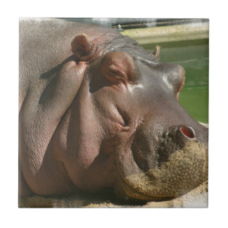 Hippopotamus Tile