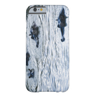 Hippopotamuses wading in a river, Africa Barely There iPhone 6 Case
