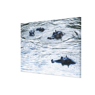 Hippopotamuses wading in a river, Africa Canvas Print