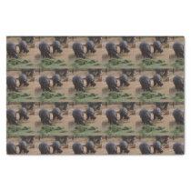 hippos tissue paper