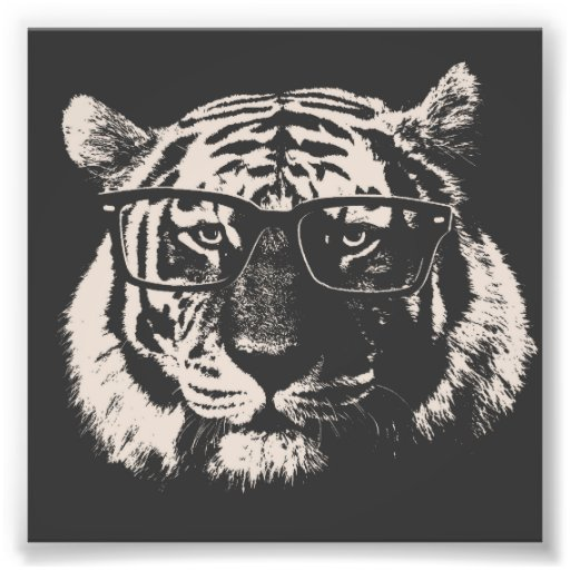 Hipster Tiger With Glasses Photo