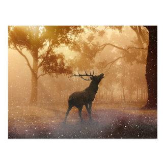 Hirsch beautiful nature scenery postcard