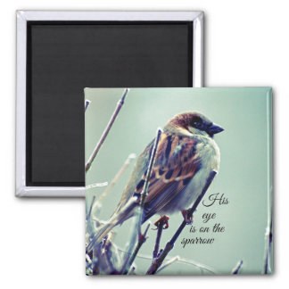 HIs eye is on the Sparrow Magnets