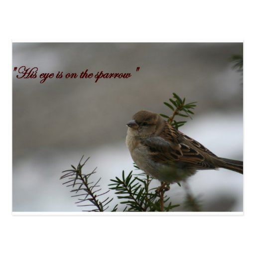 """""""His eye is on the sparrow"""" Postcard"""