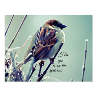 HIs eye is on the Sparrow Postcard
