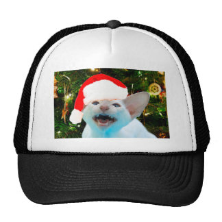 Hissing Cat in a Santa Hat