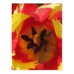 Historia 1 del tulipán tarjeta postal