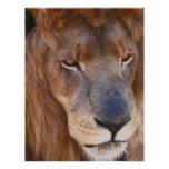 Historia de los leones membrete a diseño