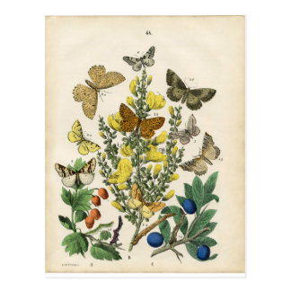 Historia natural imprimible del vintage postal