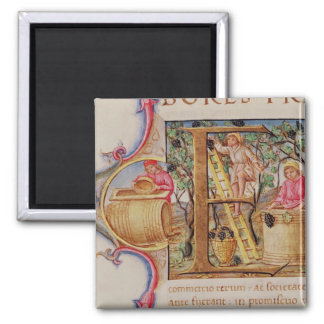 Historiated initial 'E' depicting grape picking 2 Inch Square Magnet