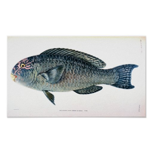 Historical Fish Study Poster