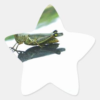 hitch hiking grasshopper star sticker