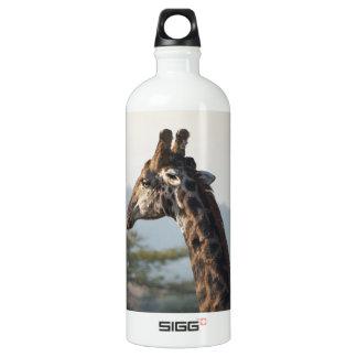 Hitching a ride on a giraffe water bottle