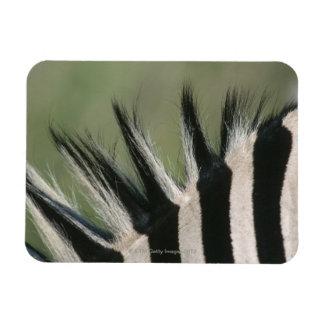Hluhluwe Umfolozi Park, Kwa-Zulu Natal Province, Rectangular Photo Magnet