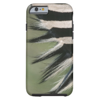 Hluhluwe Umfolozi Park, Kwa-Zulu Natal Province, Tough iPhone 6 Case