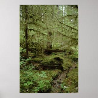 Ho Rainforest in Washington State Poster