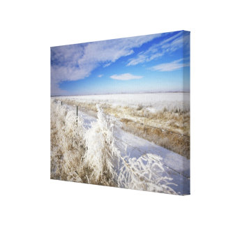 Hoarfrost coats tumbleweed and fenceline near canvas print