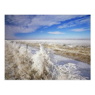 Hoarfrost coats tumbleweed and fenceline near post cards