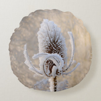 Hoarfrost on Teasels Winter Photo Nature - smooth Round Pillow