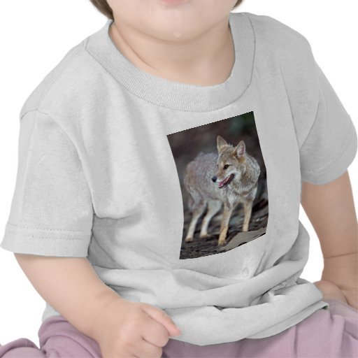 Hoary fox (Dusicyon vetulus) T Shirts