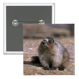 Hoary Marmot Pinback Button