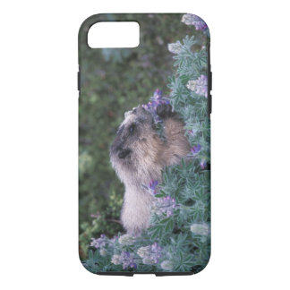 Hoary marmot feeding on silky lupine, Exit iPhone 7 Case