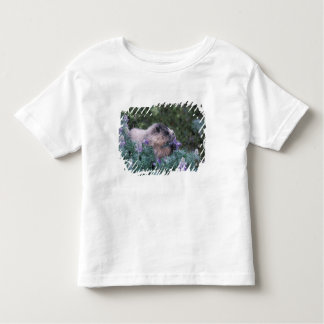 Hoary marmot feeding on silky lupine, Exit T Shirt