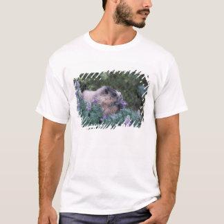 Hoary marmot feeding on silky lupine, Exit T-Shirt