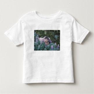 Hoary marmot feeding on silky lupine, Exit T Shirts