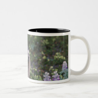 hoary marmot, Marmota caligata, feeding on silky Two-Tone Coffee Mug