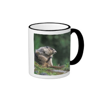 hoary marmot, Marmota caligata, scratches Coffee Mug