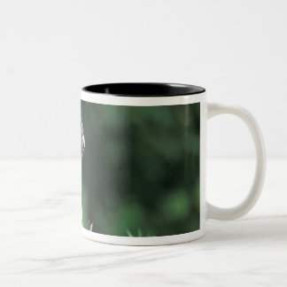 hoary marmot, Marmota caligata, scratches Two-Tone Coffee Mug