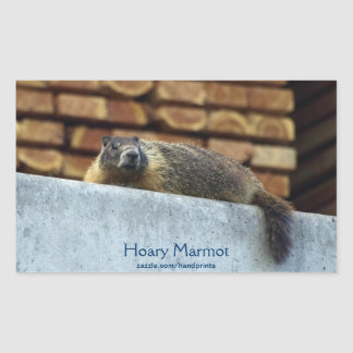 Hoary Marmot (Whistler) Wildlife Sticker