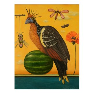 Hoatzin Postcard