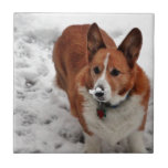 Hocico de la nieve de Charlie Azulejo Cuadrado Pequeño