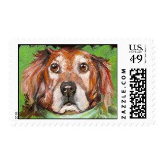 Hoefinger's Bo Stamp