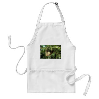 Hoffmann's two-toed sloth aprons