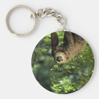 Hoffmann's two-toed sloth basic round button keychain