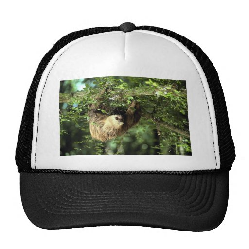 Hoffmann's two-toed sloth hat