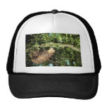 Hoffmann's two-toed sloth mesh hats