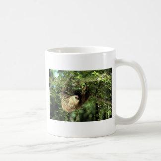 Hoffmann's two-toed sloth mugs