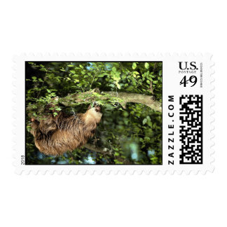 Hoffmann's two-toed sloth postage